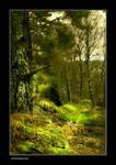 Northumberland Woodland