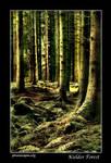 Kielder forest 4