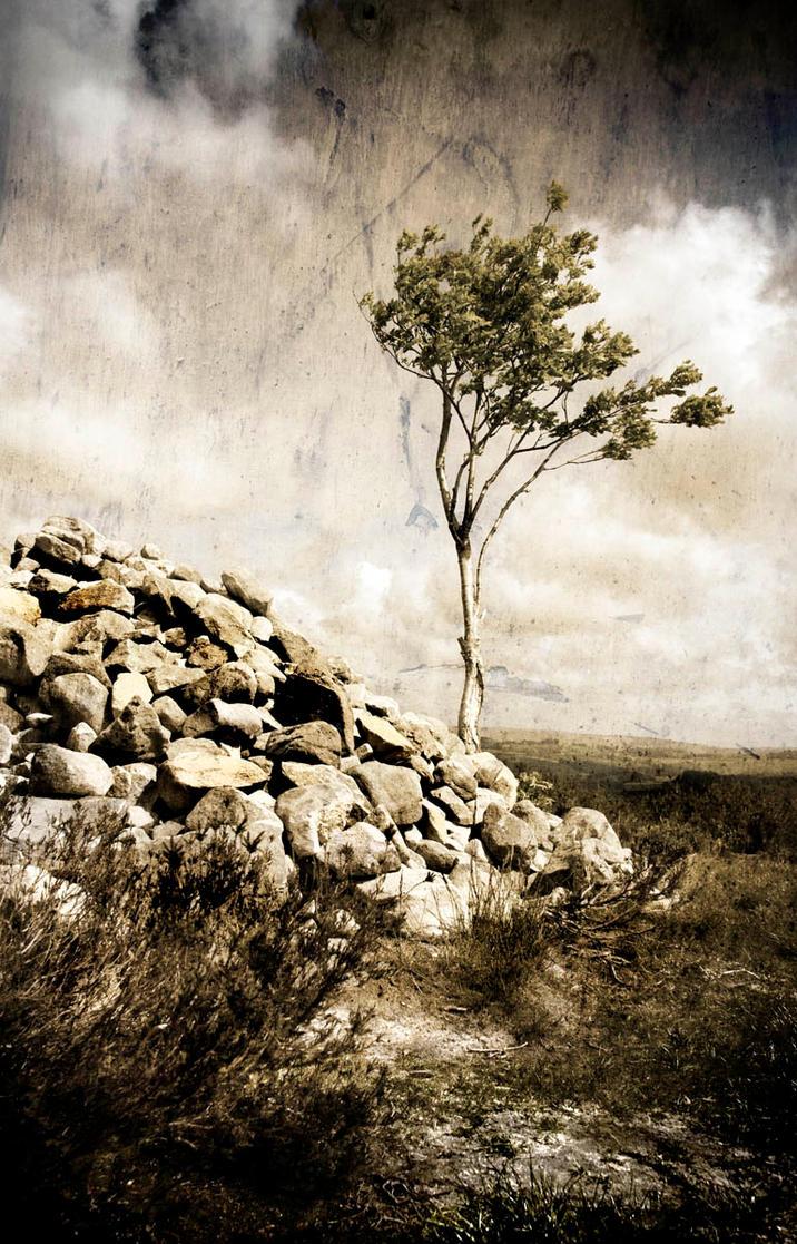 Northumberland Tree 2 by newcastlemale