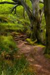 Northumberland Woodland 5