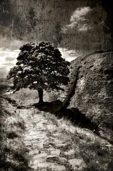 Northumberland Tree 3