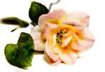 A Rose  :D