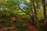 Northumberland Woodland 7