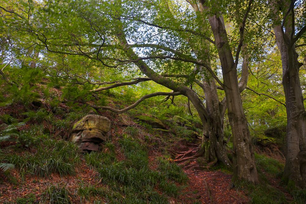 Northumberland Woodland 7 by newcastlemale