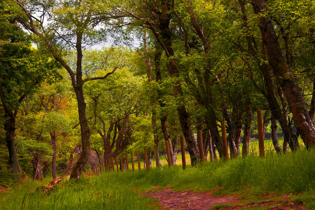 Northumberland Woodland by newcastlemale