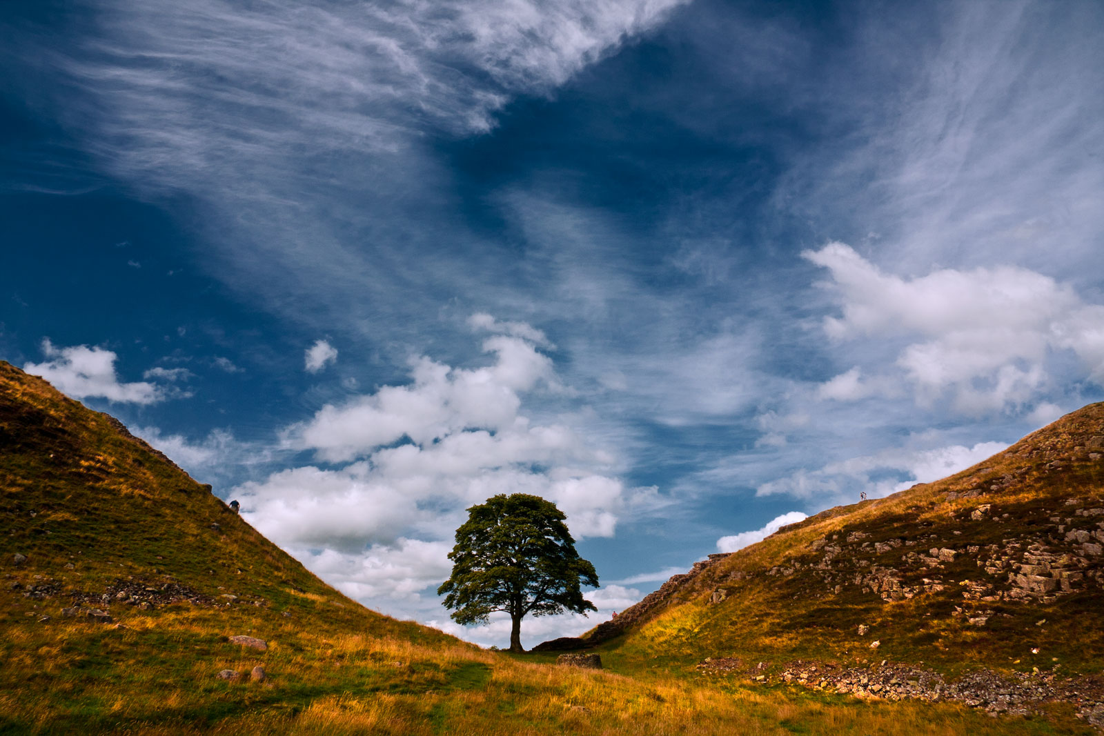 Sycamore Gap by newcastlemale