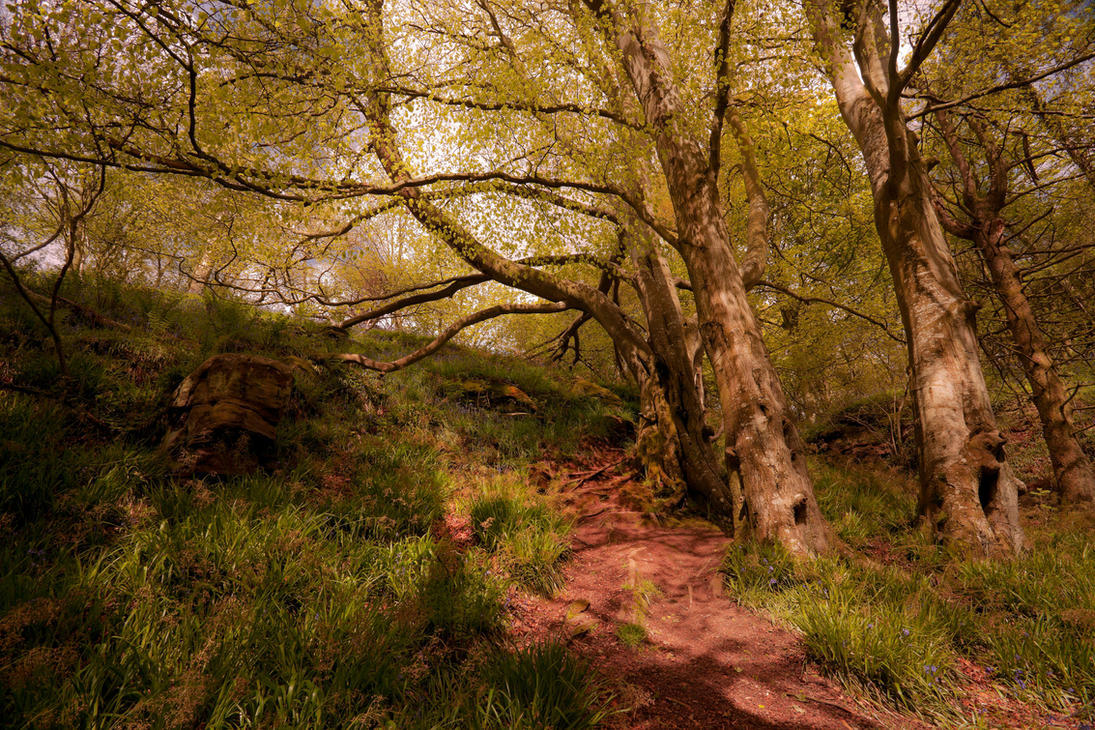 Roughting Linn Woodland by newcastlemale