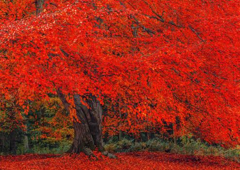 Hulne Park Autumn