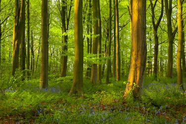 Northumberland woodland by newcastlemale