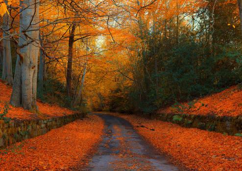 Autumn in Northumberland