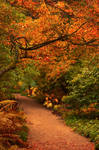 Autumn in Northumberland 2