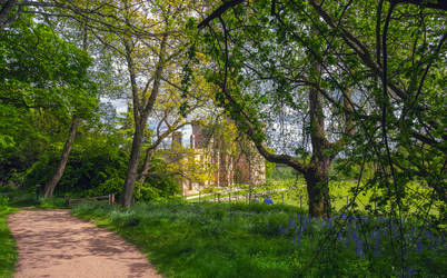 Belsay Woodland by newcastlemale