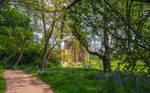 Belsay Woodland