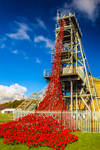 Woodhorn Poppies