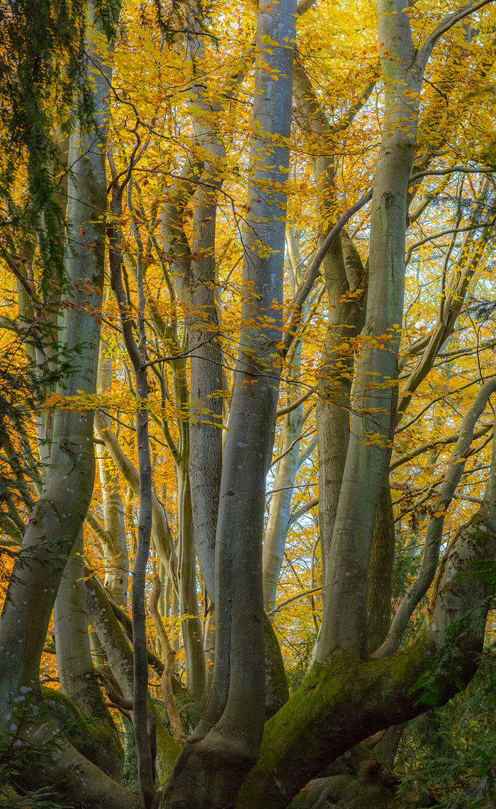 Autumn Colours by newcastlemale