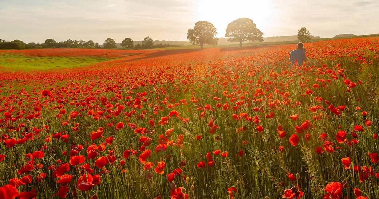 Poppy Field by newcastlemale
