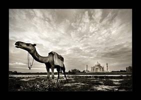 Taj Mahal - 9 by tyt2000