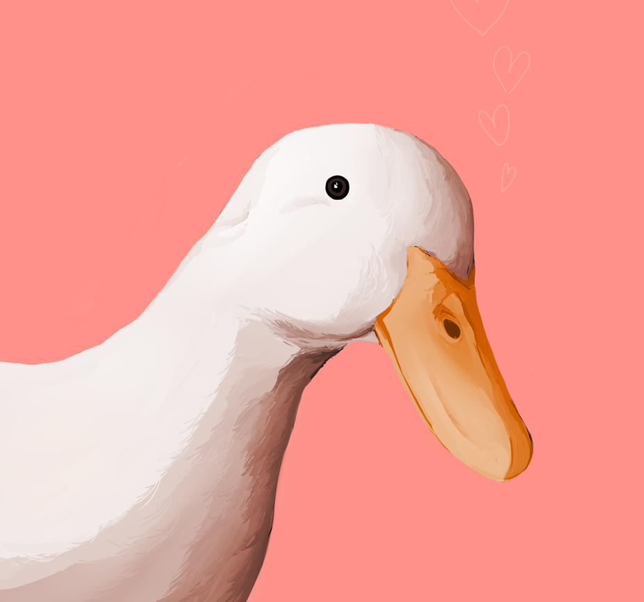 Valentine's day  duck by HanaBananime