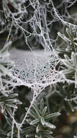 Spider Web by Banderoo