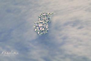 Zircons like diamond by Rosaliova