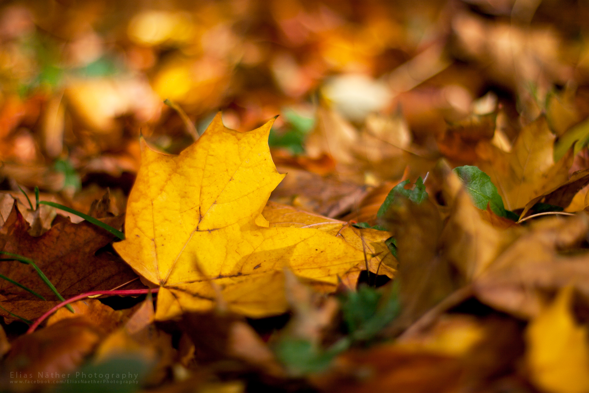Autumn Leaves by Scorpidilion