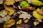 Hello Autumn by Scorpidilion