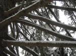 Snow Stock 8 by Orangen-Stock