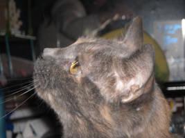 Cat Stock 14 by Orangen-Stock