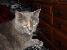 Cat Stock 16 by Orangen-Stock