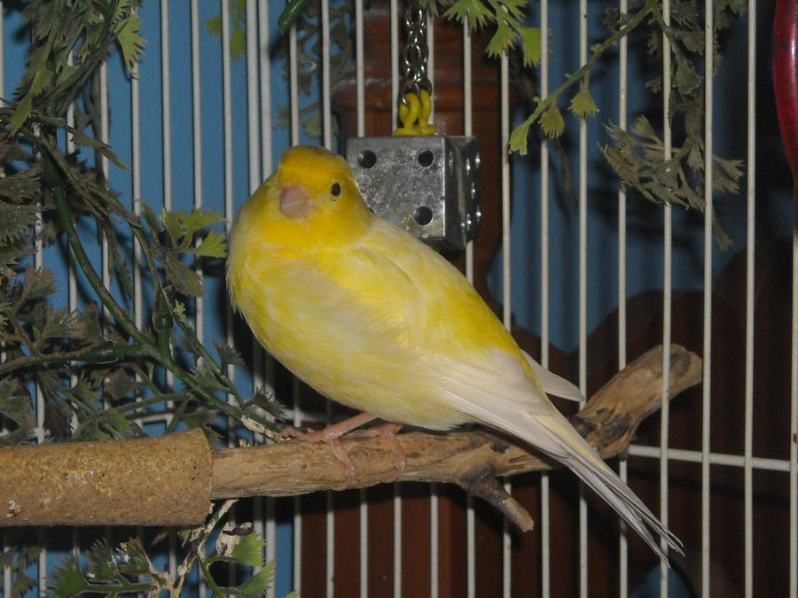 Bird Stock 1 by Orangen-Stock