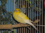 Bird Stock 1