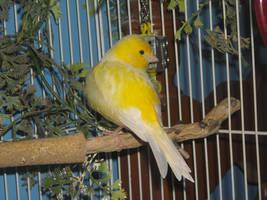 Bird Stock 2 by Orangen-Stock