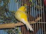 Bird Stock 2