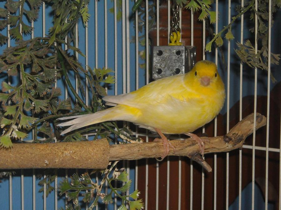 Bird Stock 3 by Orangen-Stock