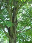 Tree Stock 19