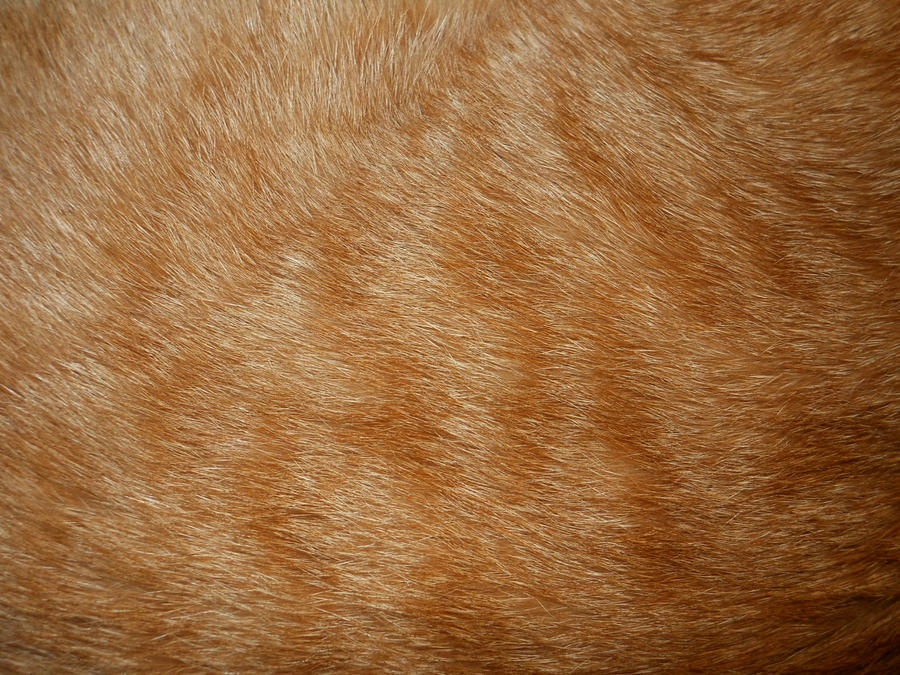 Cat Fur Texture 1 by Orangen-Stock