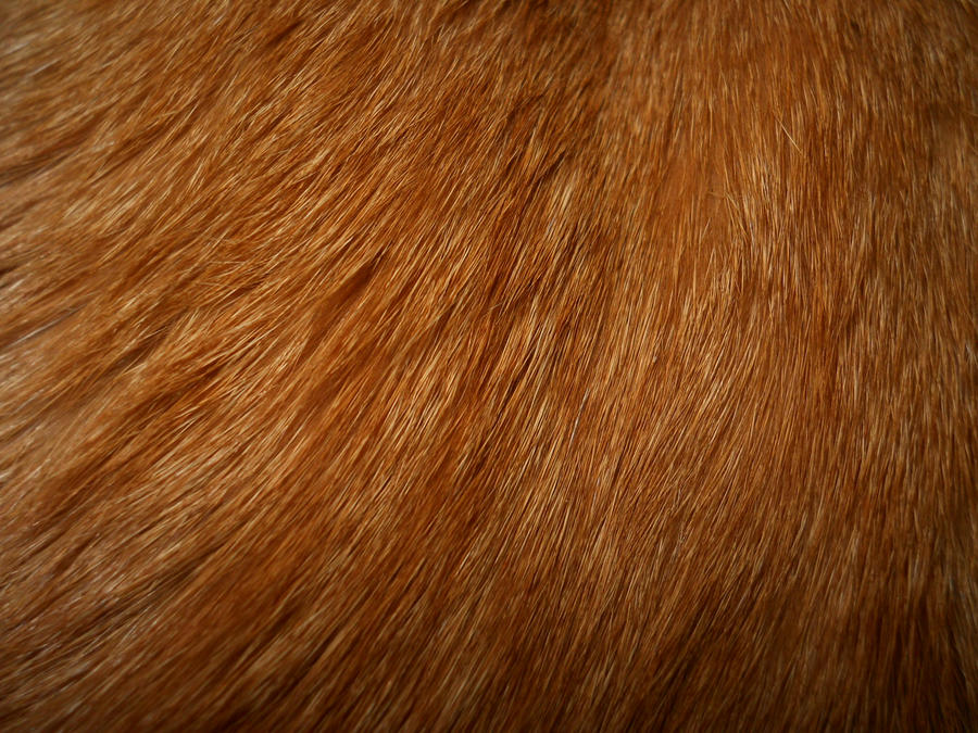 Cat Fur Texture 2 by Orangen-Stock