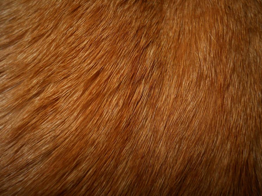 Cat Fur Texture 2