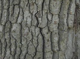 Bark Texture 6 by Orangen-Stock
