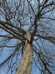 Tree Stock 20 by Orangen-Stock