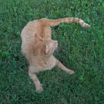 Cat Stock 44