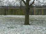 Snow Stock 19