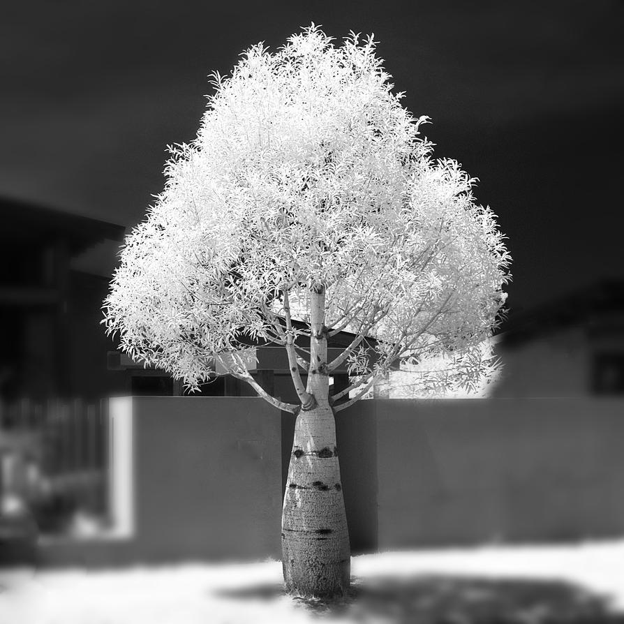 Magic Bottle Tree by colinbm1