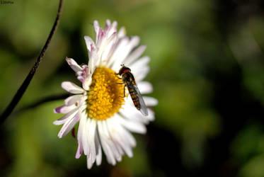Bug by 13thFox