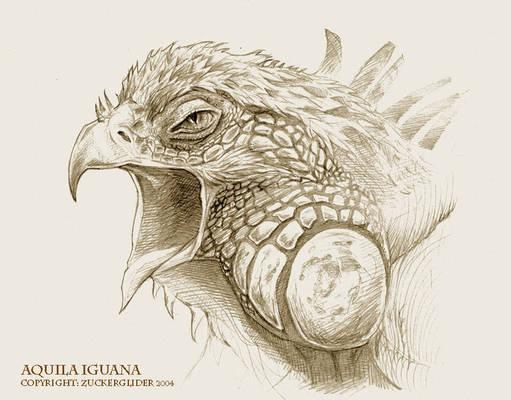 Aquila Iguana