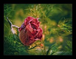 Broken Beauty by cdmihai