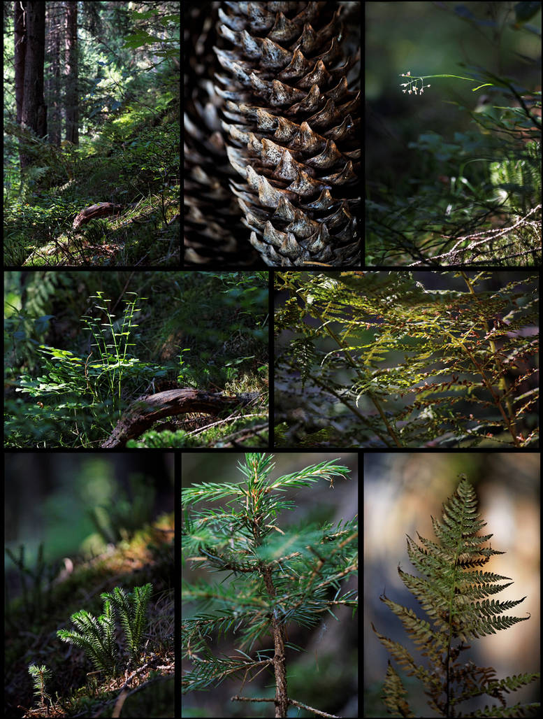 Micro Forest