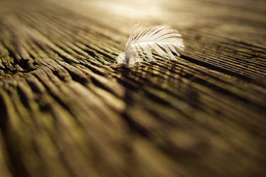 Soft Feather, Hard Plank, Soft Moss, Hard Light