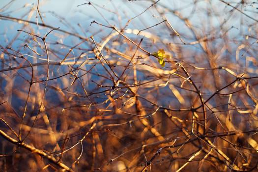 Wooden Web