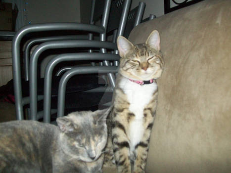 my two kittys